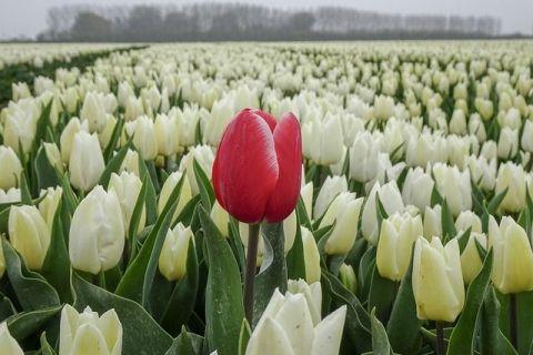 Țara din UE de 6 ori mai mică decât România și cu un sfert din teritoriu sub nivelul mării anunță exporturi agricole istorice în 2019. Florile, cel mai vândut produs