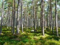 Ministrul Mediului promite cea mai amplă campanie de împădurire pe care a avut-o vreodată România