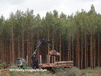 """Ca să construiască """"mașini verzi"""" în Germania, Tesla taie mai întâi 90 de hectare de pădure. Reacții dure la Berlin"""