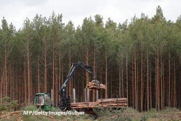 Ca să construiască  mașini verzi  în Germania, Tesla taie mai întâi 90 de hectare de pădure. Reacții dure la Berlin