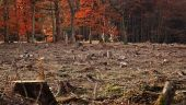 Cea mai mare defrișare ilegală din ultimii cinci ani a fost descoperită la Sighetu Marmaţiei. Schema infracţională prin care România a pierdut 340 de hectare de pădure
