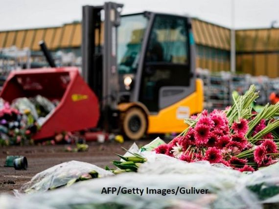 Situație inedită în Olanda, în ultimii 100 de ani: Milioane de flori sunt distruse zilnic, din cauza COVID-19
