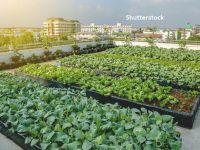 Pandemia de COVID-19 schimbă radical fața orașelor. Fermierii urbani și grădinile de pe blocuri se înmulţesc în contextul carantinei impuse