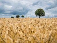 Bloomberg scrie că temerile privind aprovizionarea cu alimente pe fondul pandemiei sunt în creştere și dă ca exemplu România, care interzice exporturile de cereale