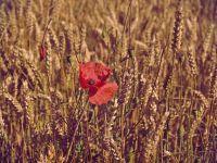 Bloomberg: UE critică decizia României de a interzice exporturile de produse agricole. Reacția ministrului Agriculturii