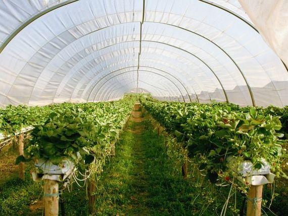 Italia cheamă românii din nou la lucru. Cum vor putea merge lucrătorii sezonieri la muncă în agricultură