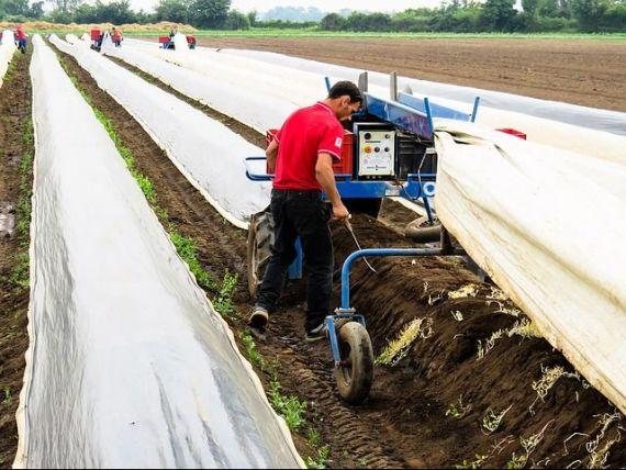 Muncitorii români, înlocuiți cu roboți. Soluția găsită de fermierii britanici pentru a culege recoltele, după ce pandemia a gonit lucrătorii est-europeni