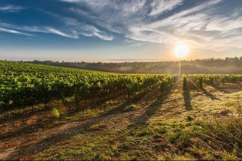 Muncitoare românce neprețuite. Un viticultor italian a trimis un avion privat în România pentru a aduce o echipă de femei cu care lucrează de ani de zile