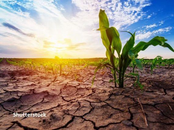 Ministerul Agriculturii lucrează la un mecanism bancar de amânare a ratelor pentru fermieri. Oros:  Majoritatea băncilor ar fi de acord