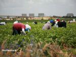 Spania anunță cel mai mare șomaj din ultimii 10 ani în agricultură. Un sfert dintre şomeri sunt străini