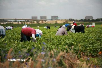 Cum se schimbă regimul lucrătorilor sezonieri în UE. Comisia Europeană a elaborat o serie de măsuri pentru protecția muncitorilor, în contextul pandemiei