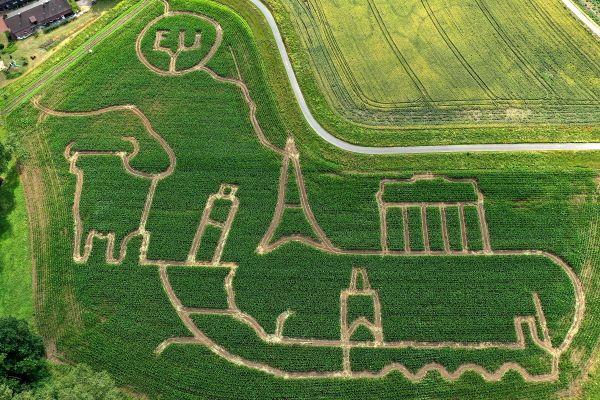 Un agricultor din Germania a realizat un labirint în lanul lui de porumb, reprezentând monumente representative ale Europei, între care Turnul Eiffel, Poarta Brandenburg sau Podul Carol din Praga. Foto: AFP/Getty/Guliver
