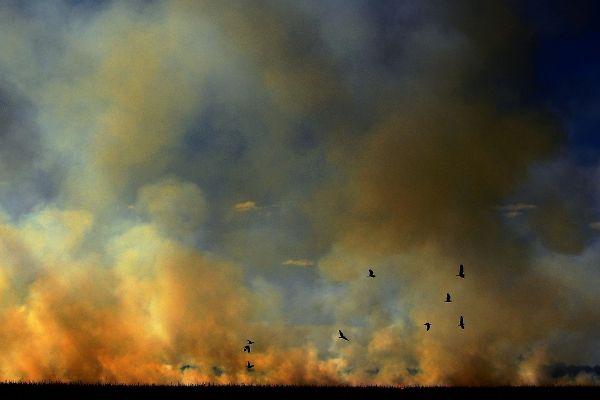 Păsările fug din calea incendiilor care au cuprins pădurea tropicală în statul Mato Grosso, din Brazilia. Foto: CARL DE SOUZA/AFP/Getty Images/Guliver