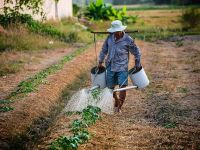 Tinerii fug de agricultură. Aproape jumătate dintre românii care trăiesc din cultivarea pământului sunt trecuţi de 50 de ani, iar 17 au atins suta