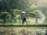 UE impune taxe vamale pentru produsele din Cambodgia, din cauza limitării libertăţii de exprimare şi al drepturilor civile şi politice pentru cetățeni
