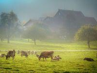 Un inginer agronom face, la Brăila, prima fermă de carne 100% ecologică din România, cu finanțare europeană de 2,2 mil. euro