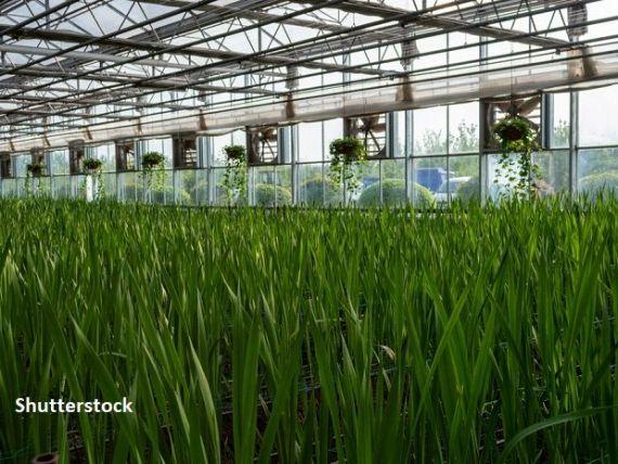 Plantații de orez, culturi de legume și ferme piscicole în mijlocul deșertului. Abu Dhabi colaborează cu firme care cresc plante pe Stația Spațială, pentru a-și produce propria hrană