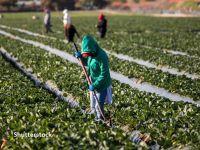 Pandemia adâncește diferențele de salarizare în rândul migranților, în țări în care lucrează mulți români. OIM cere guvernelor să introducă salarii minime adecvate