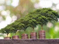 (P) De ce este important să colaborezi cu o firmă de consultanță pentru mediu?
