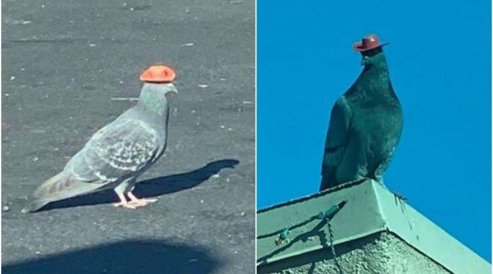 VIDEO Noua senzație a internetului în America: 2 porumbei cu pălăriuțe de cowboy pe cap
