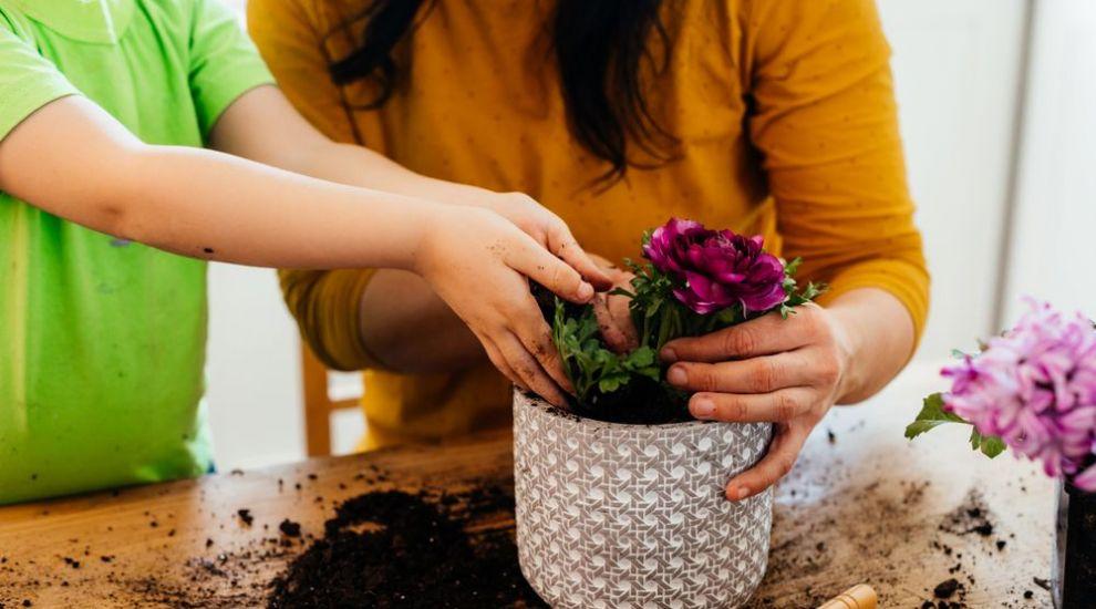 Cum creezi cele mai frumoase aranjamente florale pentru grădina ta