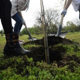 UEFA va planta 600.000 de copaci in cele 12 tari-gazda ale EURO 2020