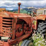 (P) 5 afaceri in agricultura in care sa investesti in 2021